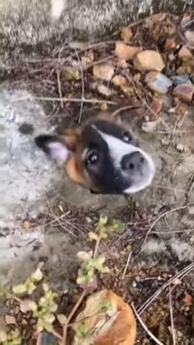 大変!ワンコの頭が排水溝の穴にハマっちゃった!!なんとかワンコを救出しようと悪戦苦闘!!