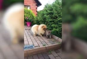 ワンコとピューマは大親友!ピューマはどんどん大きくなるも、ずっと仲良し