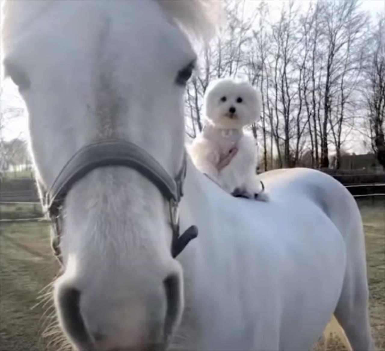長年育んだ異種の友情で息がぴったり!騎手のように馬の背に乗るワンコがかわいい!