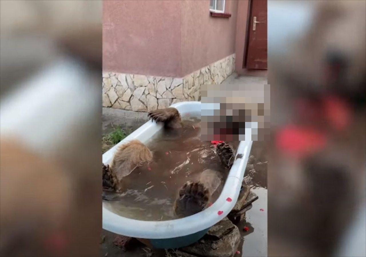 実にエレガント!バラ風呂でリラックスする巨大な動物とは!?