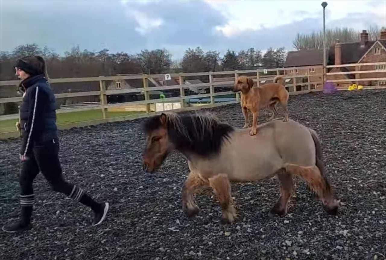 馬とワンコ、種を超えた動物の友情にほっこり。仲良しすぎて馬がワンコのお座りまで真似ようとしちゃいます!!