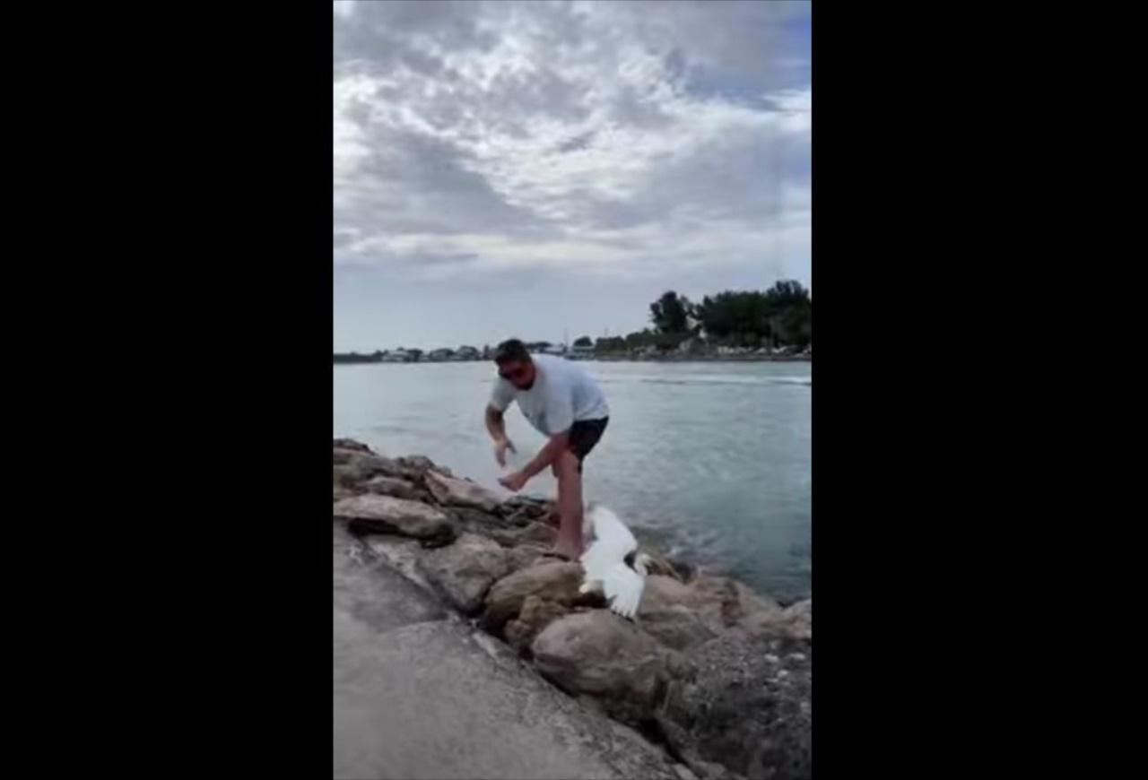 釣り糸にからまっていたサギを助けようとしていた男性。撮影者も協力し、見事な連携で無事救出!