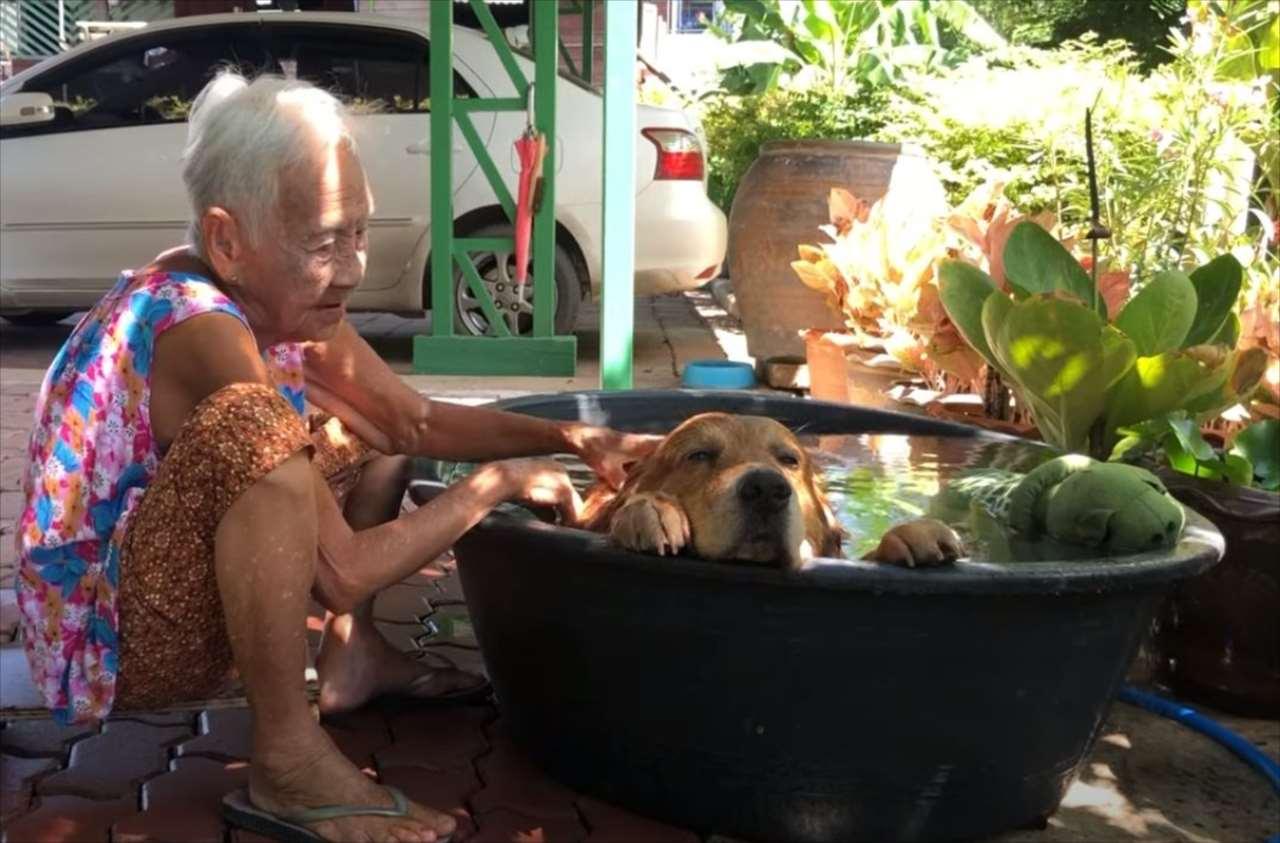 暑くて水風呂に浸かるワンコの姿が実に気持ちよさそう! 飼い主との親密さがうかがえる雰囲気にほっこり
