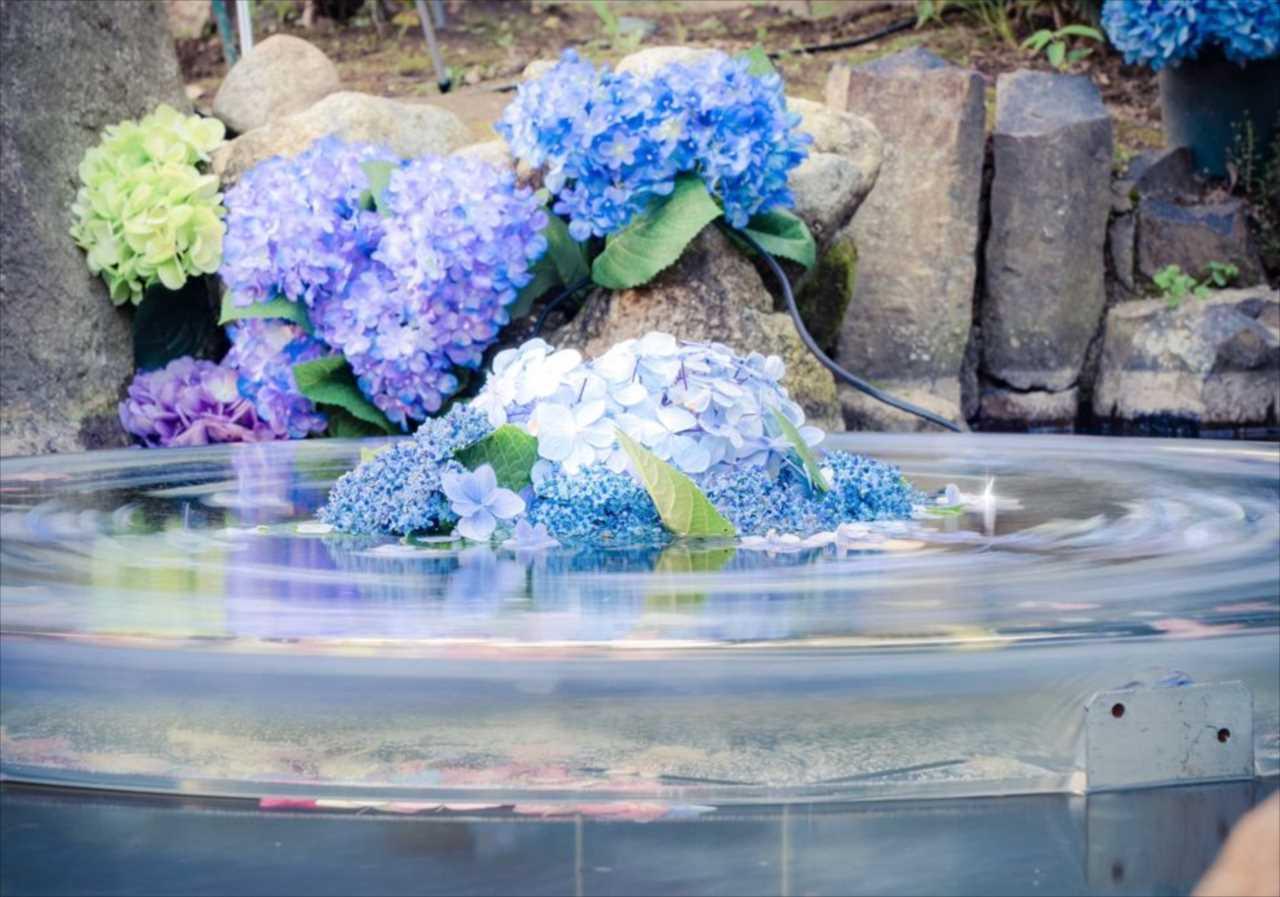 回る花弁に心を奪われた・・・紫陽花と水が織りなす幻想的な世界観を表現した写真に反響