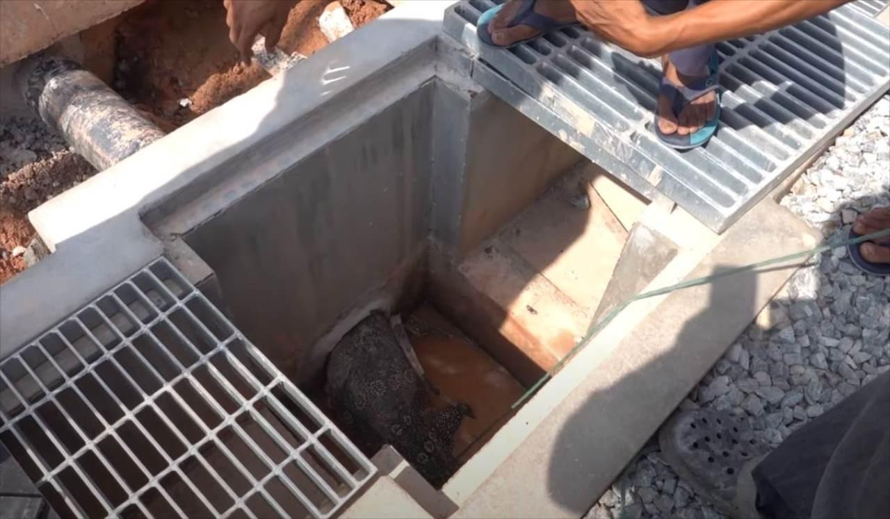 【難航する救出劇】水道管から出られなくなったオオトカゲを助けようと人々が立ち上がった!