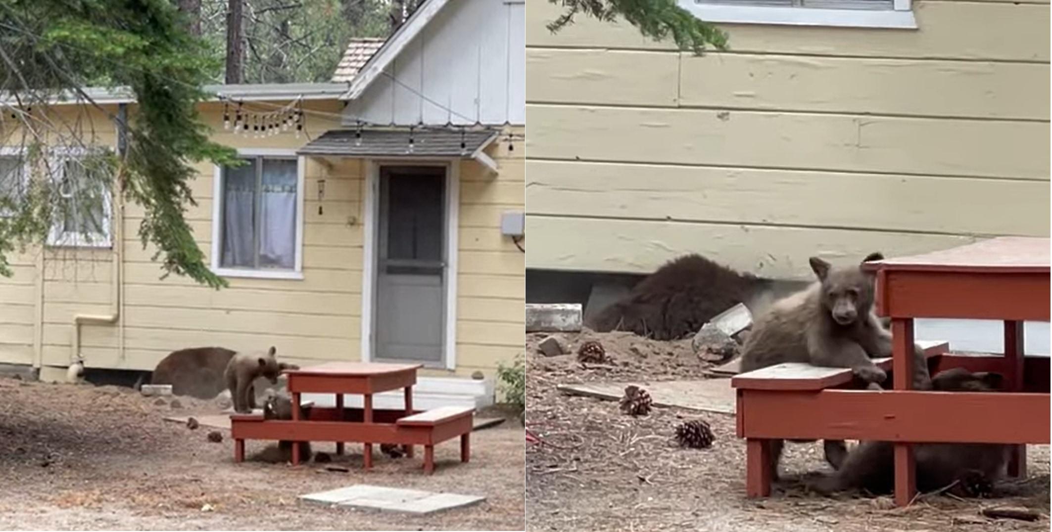 庭に置かれたテーブルで戯れるコグマ達と思いきや、その背後でビックリなことが行われていました!
