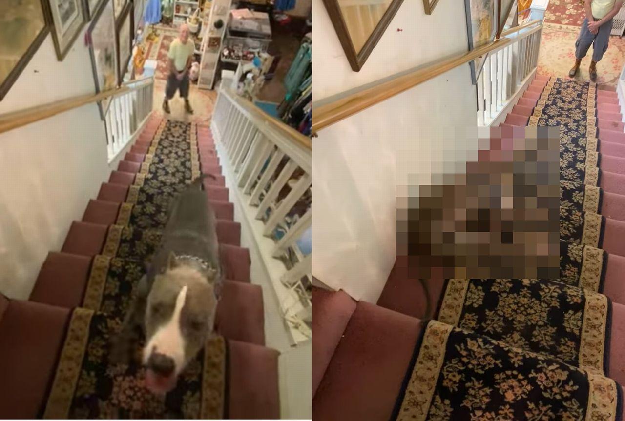 階段の降り方のクセが強いんじゃ~!上って来るのは普通なのに、下りていく時はどうにも個性的な姿になってしまうワンコ