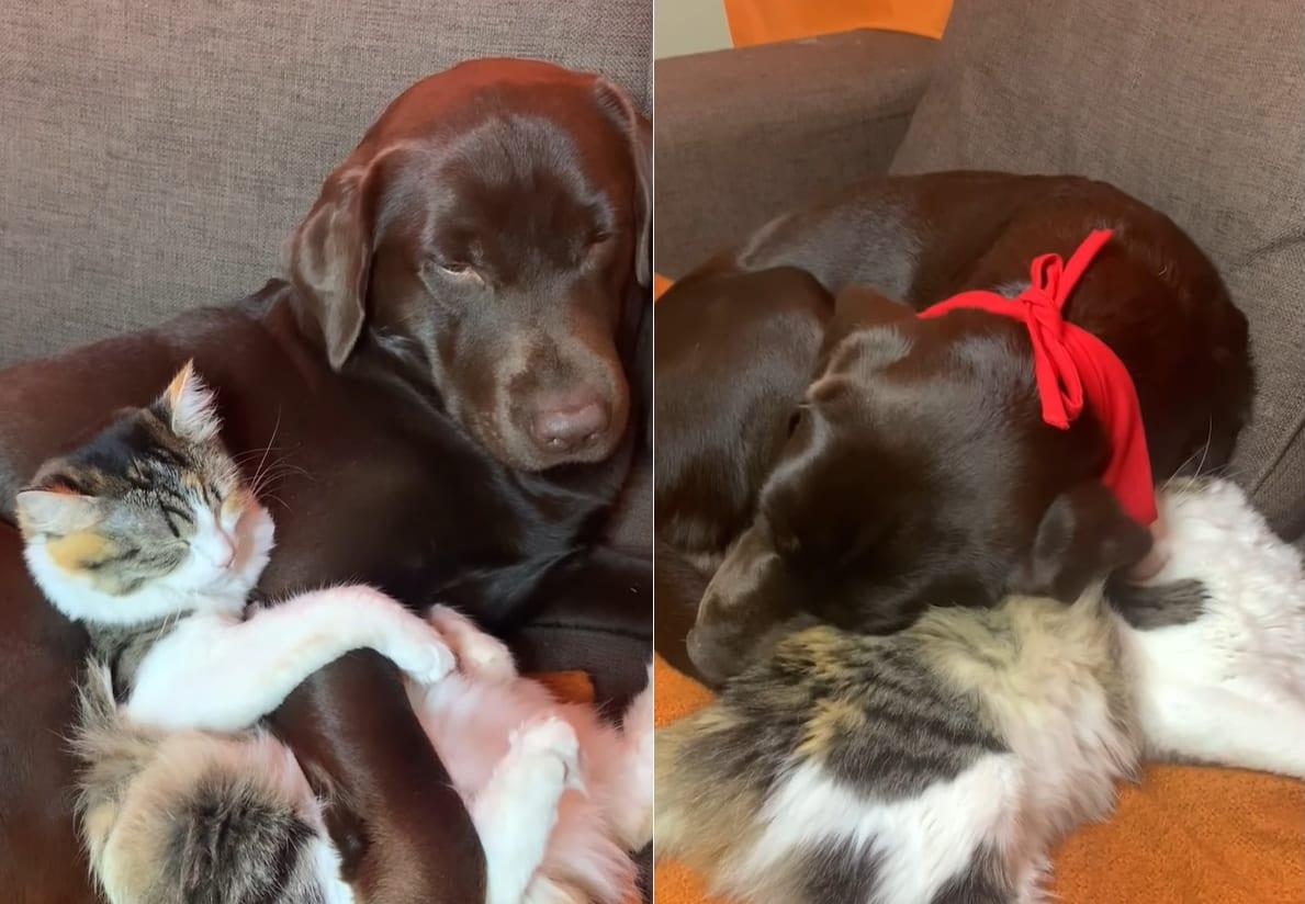 とっても仲良し!ニャンコがワンコの腕を抱き枕にしたり、ワンコはニャンコを枕にしたりする姿に心癒される