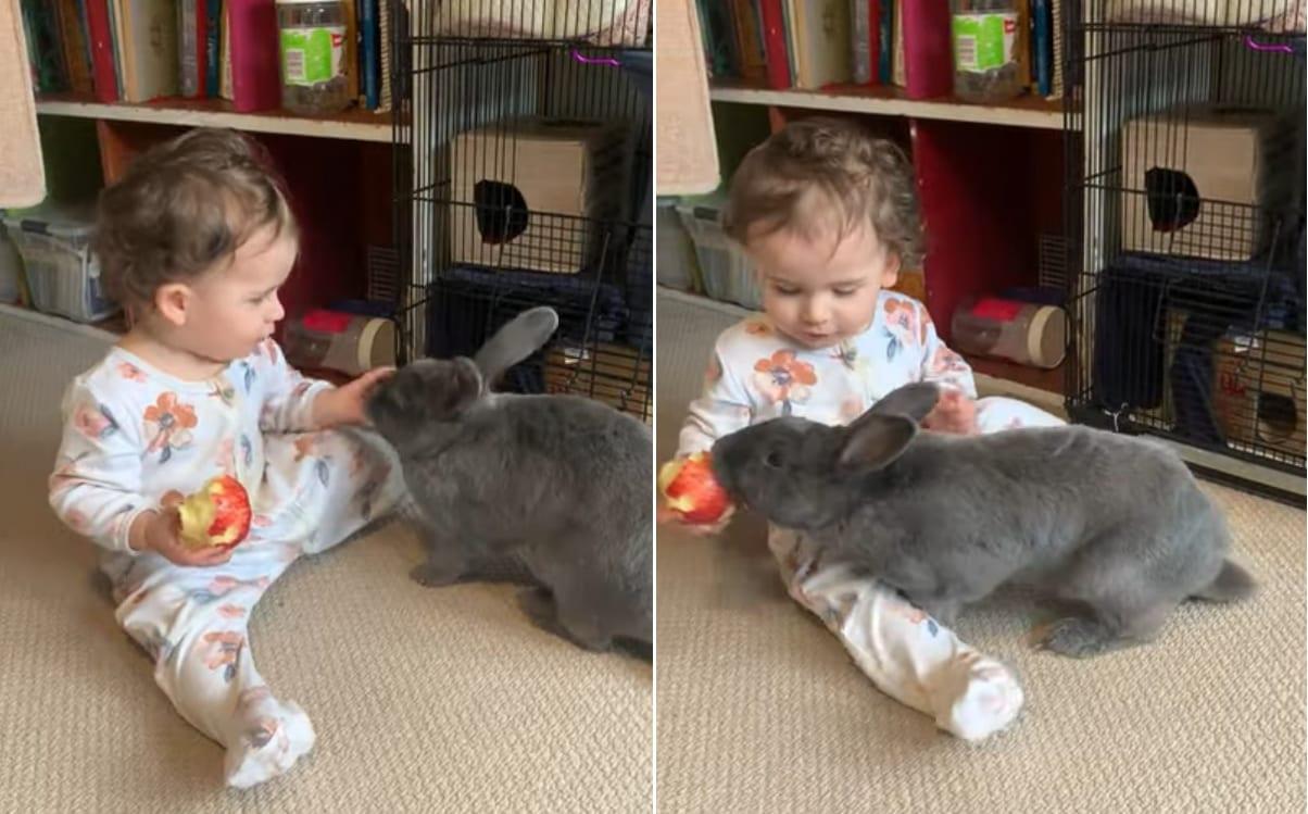 ウサギさんは赤ちゃんと遊んでいるのではなく、その手にあるリンゴを付け狙っていたようです・・・
