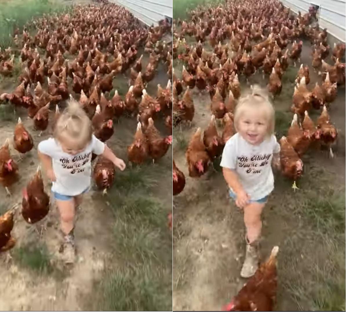 ニワトリのリーダー??数えきれないほどのニワトリを率いて歩く女の子