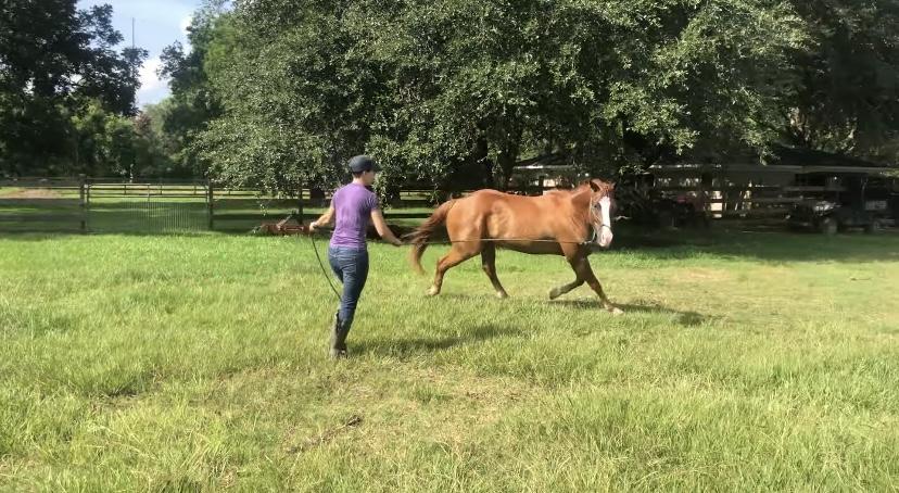 走行中の馬が滑って転んでしまった!と思ったら・・・直後の行動に笑えてしまう