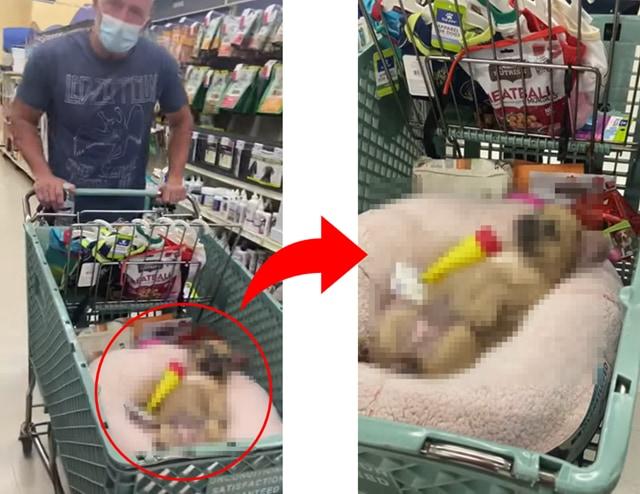 お買い物に連れ添うワンコの赤ちゃん、カートの中で見せた姿がかわいすぎる!!