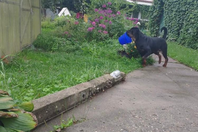 「ひとりでできるもん」温室の前にバケツを咥えてやってきたイヌの器用で賢い行動に感心!