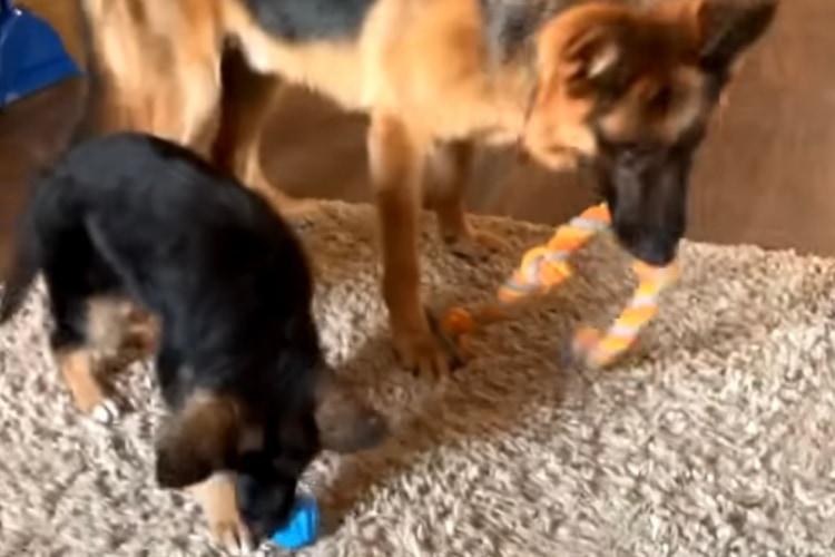 「あっ、やっぱりそっちがよかった・・・」おもちゃをトレードに出したことを後悔するイヌ
