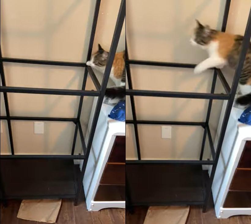 「え?ここにガラスないの?!」棚の上に登ろうとしたネコの身に降りかかった不幸な事故!