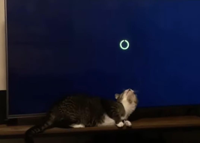 人間的にはローディング時間はもどかしくて嫌なものですが・・・猫にとっては最高の遊び時間だったようです
