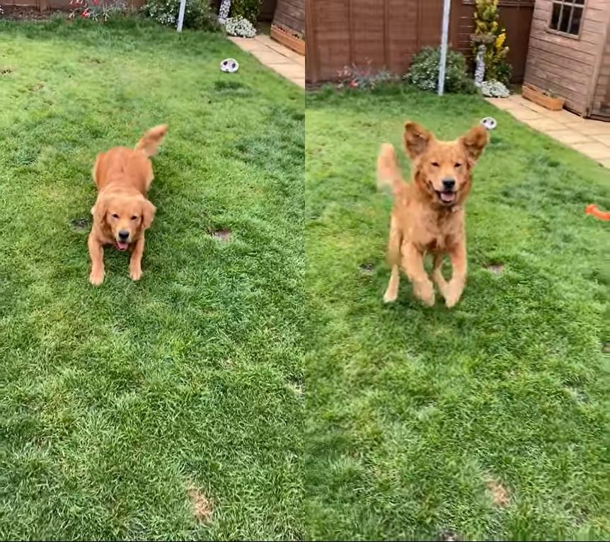 「ぴょーん!」ジャンプするイヌ。その姿がまるでカエルみたい!