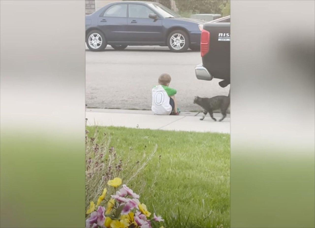 男の子が悲しんでいることに気づいたネコ。その後にとった行動に胸を打たれる