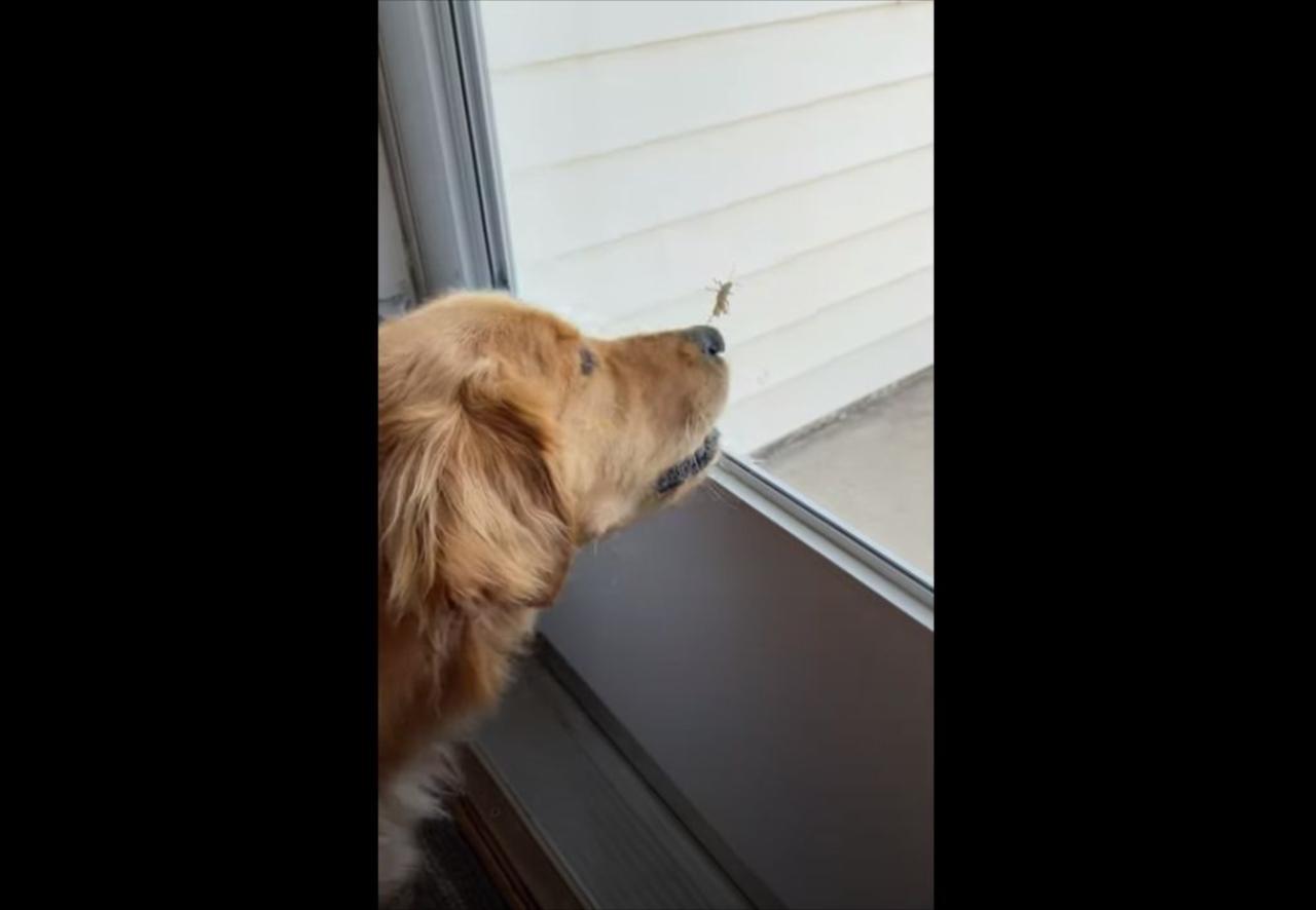 何をしてもダメだワン!窓の外にいるバッタを口に入れようと必死なワンコの姿がい愛らしい