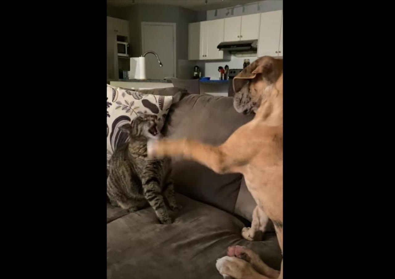 イヌからちょっかいを駆けられ続けるにネコ。やられっぱなしかと思いきや、強烈なカウンターを炸裂させました!
