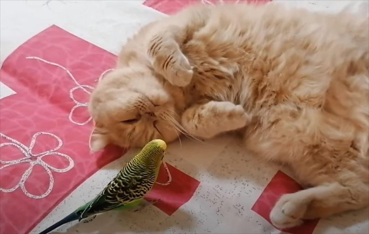 「絶対起きたくニャい!」お友達がちょっかいをかけてきてもひたすら眠り続けるマイペースすぎるおネコ様