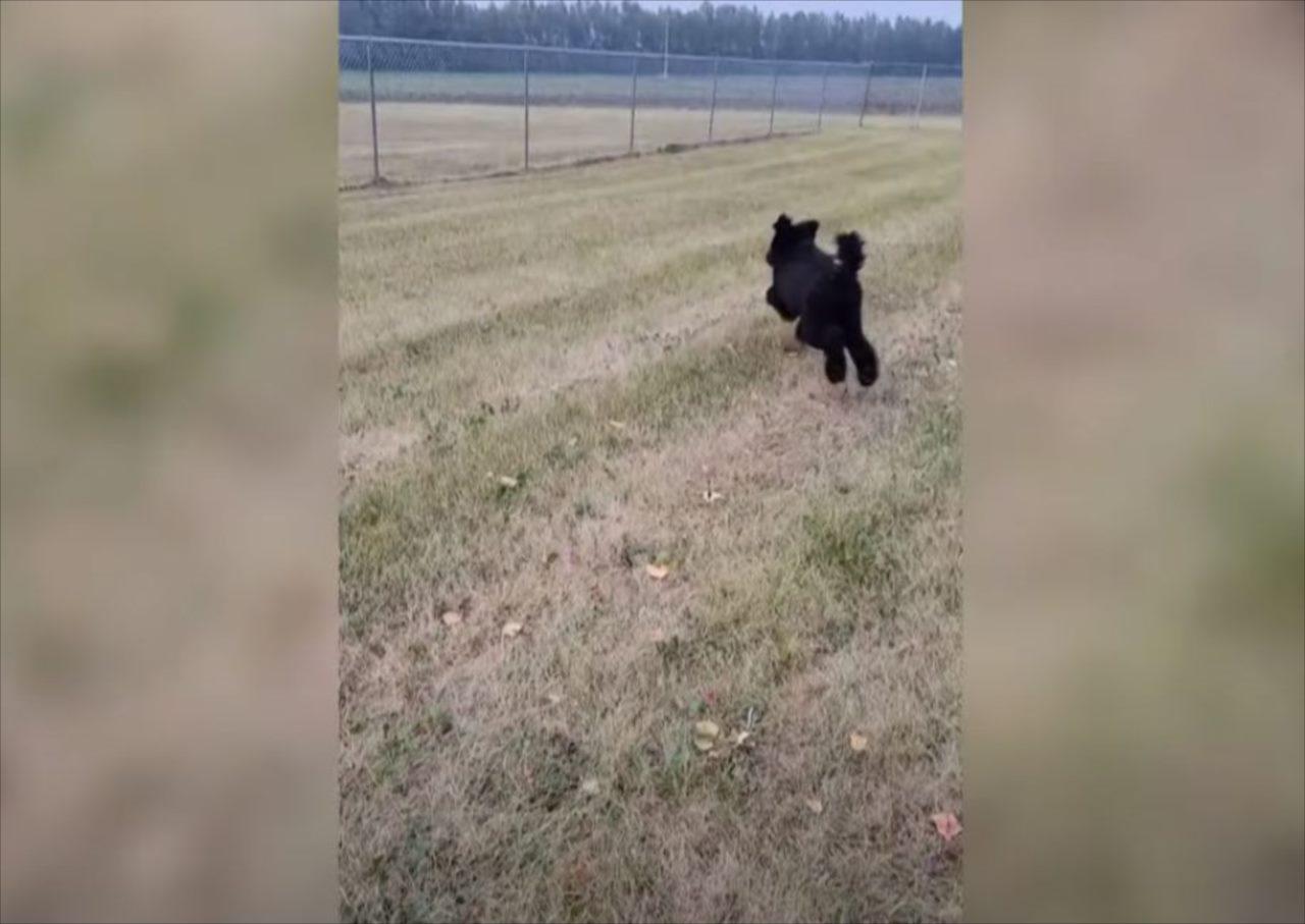 投げてもらったオモチャを追うイヌ。意気揚々と追っていきダイブするも・・・