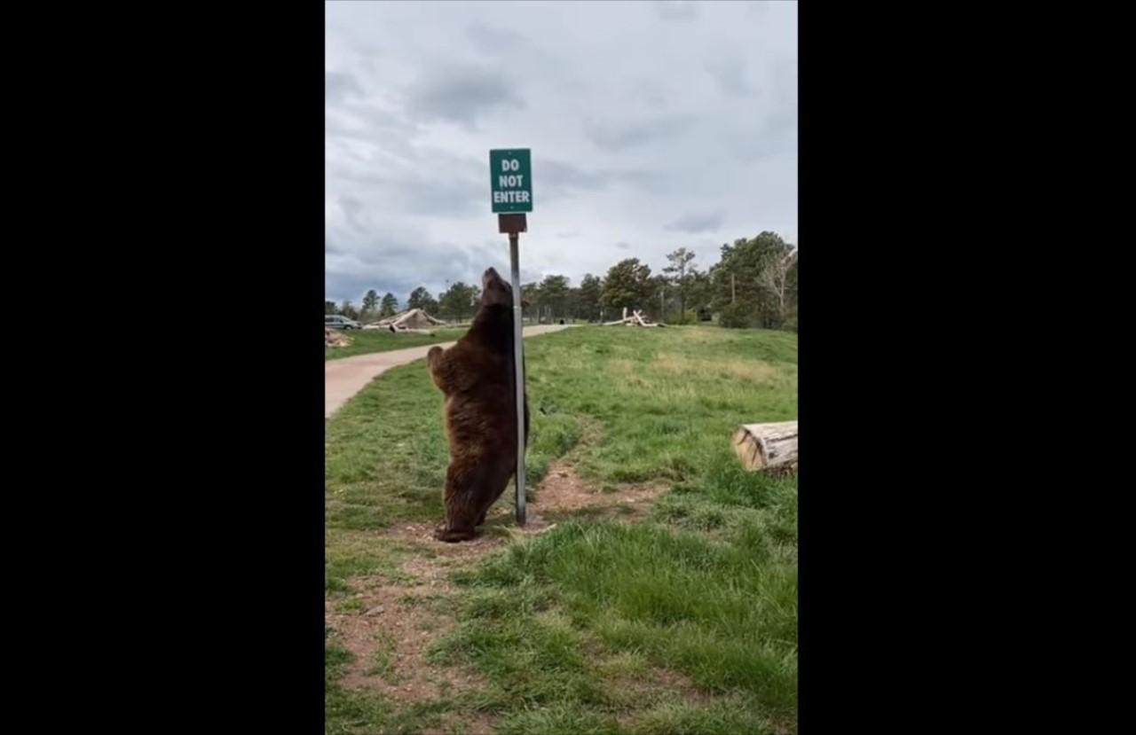 背中がかゆい?ポールに背中をこすりつけるクマ。その動きがなんだかセクシー?