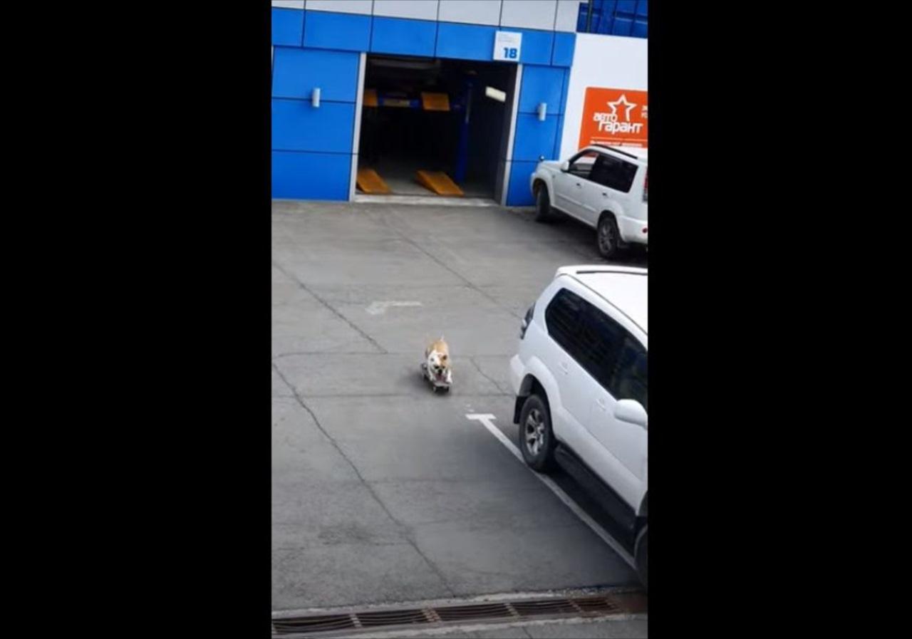 子供が駐車場で遊んでいると思って窓の外を見たら・・・スケボーを実際にしていたのはイヌでした!