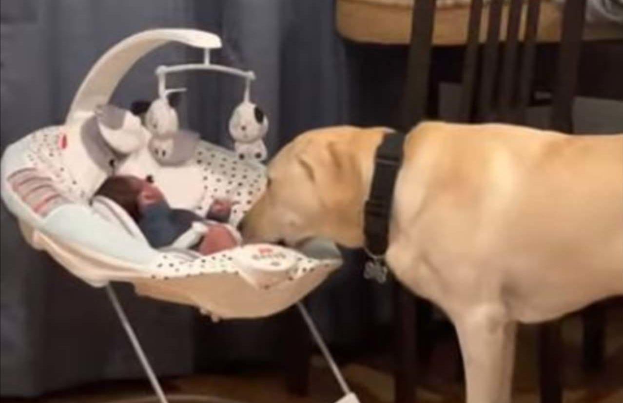 「どうしたの~?」赤ちゃんが声をあげると、そばに寄り添いあやす優しいイヌ