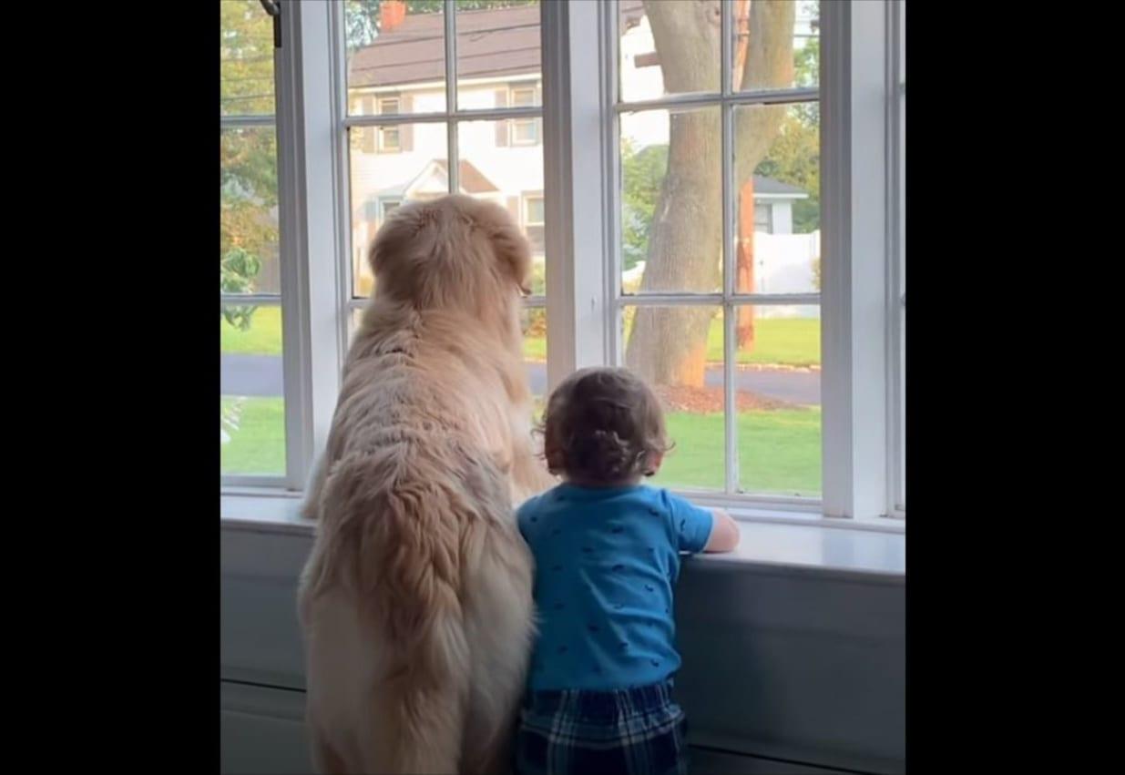 その背中からストーリーを感じる・・・。ワンコと子どもが一緒に窓から外を眺める様子がまるで兄弟のよう