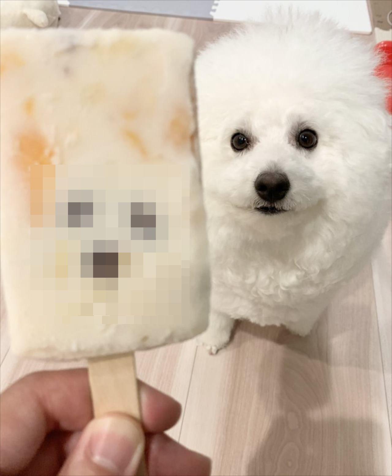 【激似】アイスを食べようとしたら・・・その中に愛犬が封印されていた?!