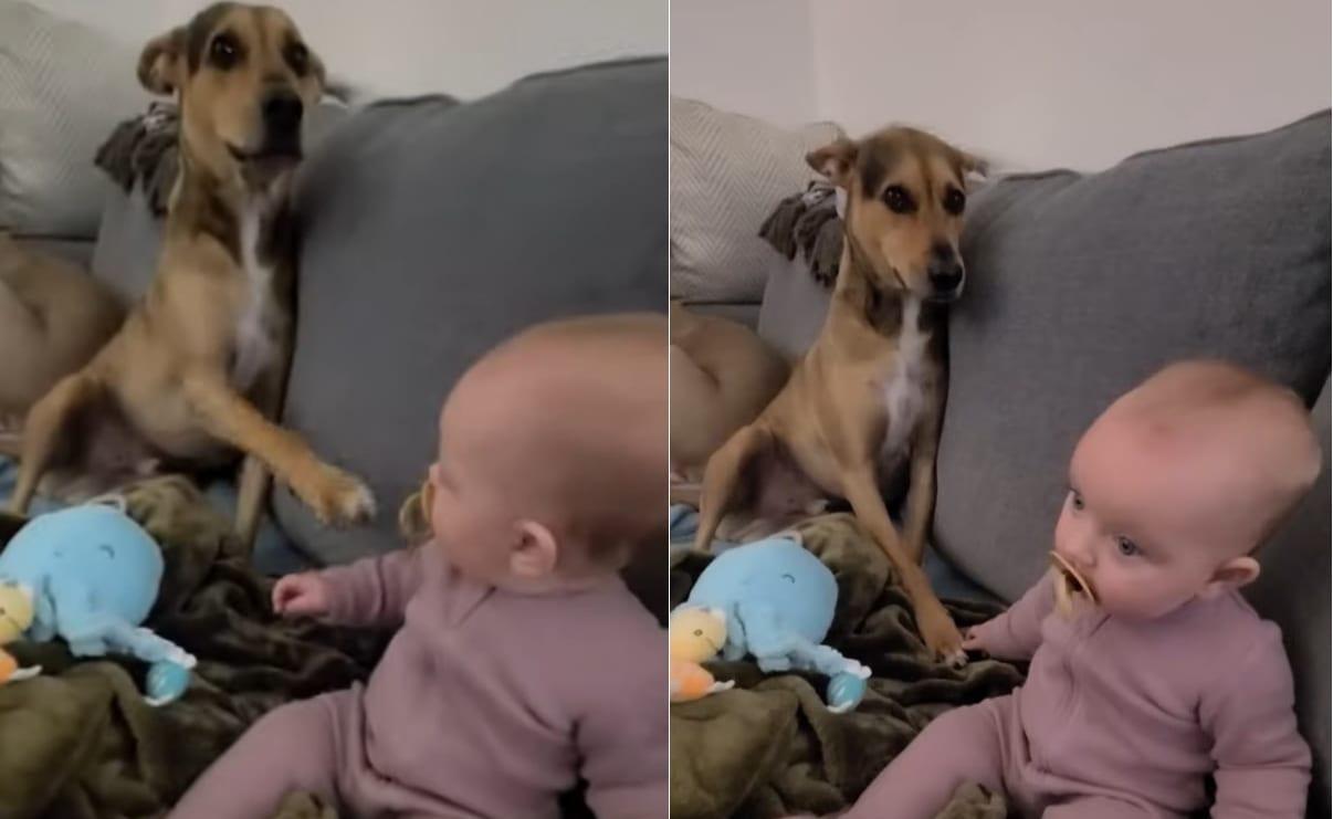 「ちょっと茶化さないでよ!」「外野なんて気にしないで手をつなごうよ」そんなアテレコをしたくなる、尊いワンコと赤ちゃんの様子