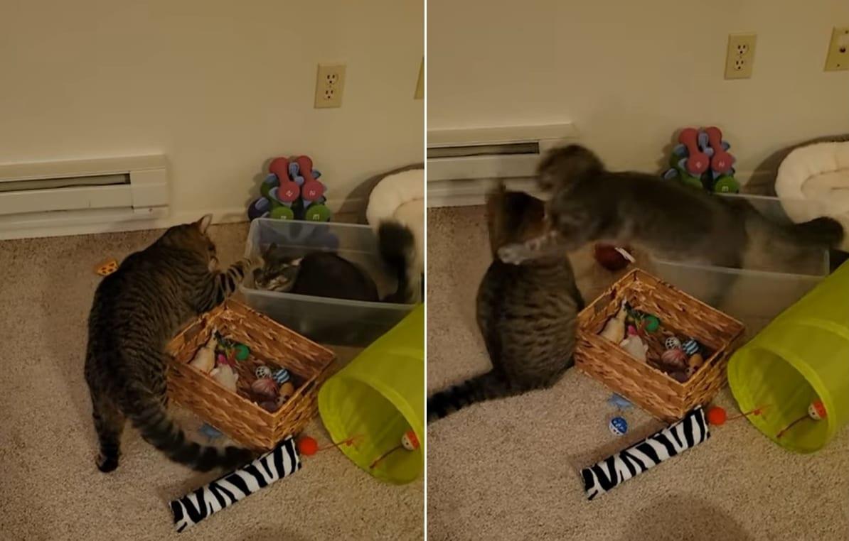 【まさかの展開】容器に入っているネコ、外から攻撃してきた子に反撃したと思ったら・・・