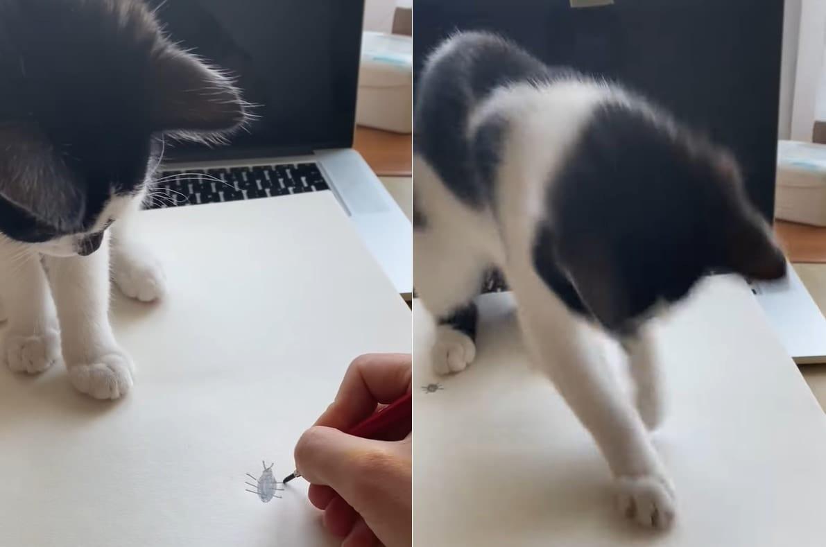 「あれ?捕まえられない??」飼い主さんが落書きした虫を躍起になって捕まえようとするネコの様子がなんともかわいい