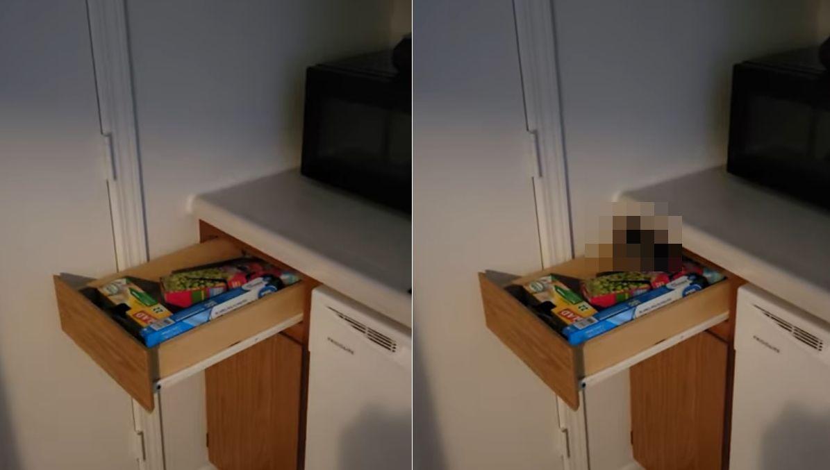 誰もいない机の引き出しがひとりでに開いたと思ったら・・・【幽霊の正体見たり子猫かな】