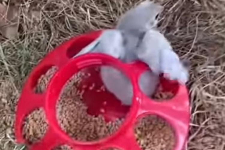容器の穴にすっぽりはまって抜けなくなったヒヨコ。その状況に気付いた飼い主さんの手で無事救出されました!