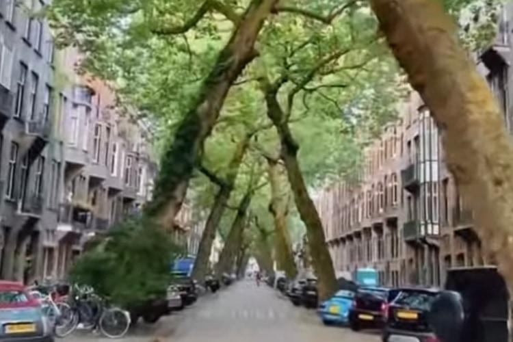 住宅街に現れた異世界!アムステルダムにある木のトンネルが神秘的で美しい!