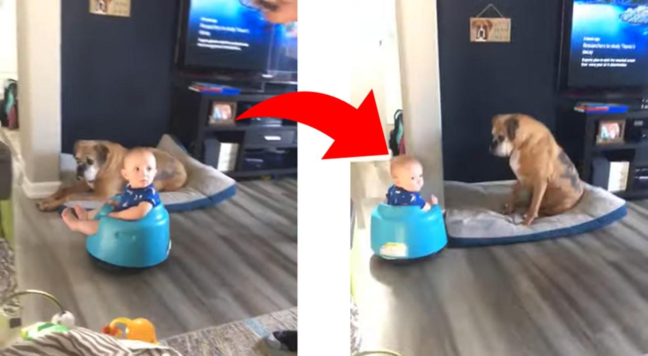 ロボット掃除機に興味津々の赤ちゃん。そこでベビーチェアごとロボット掃除機の上にドッキングさせてみたところ・・・
