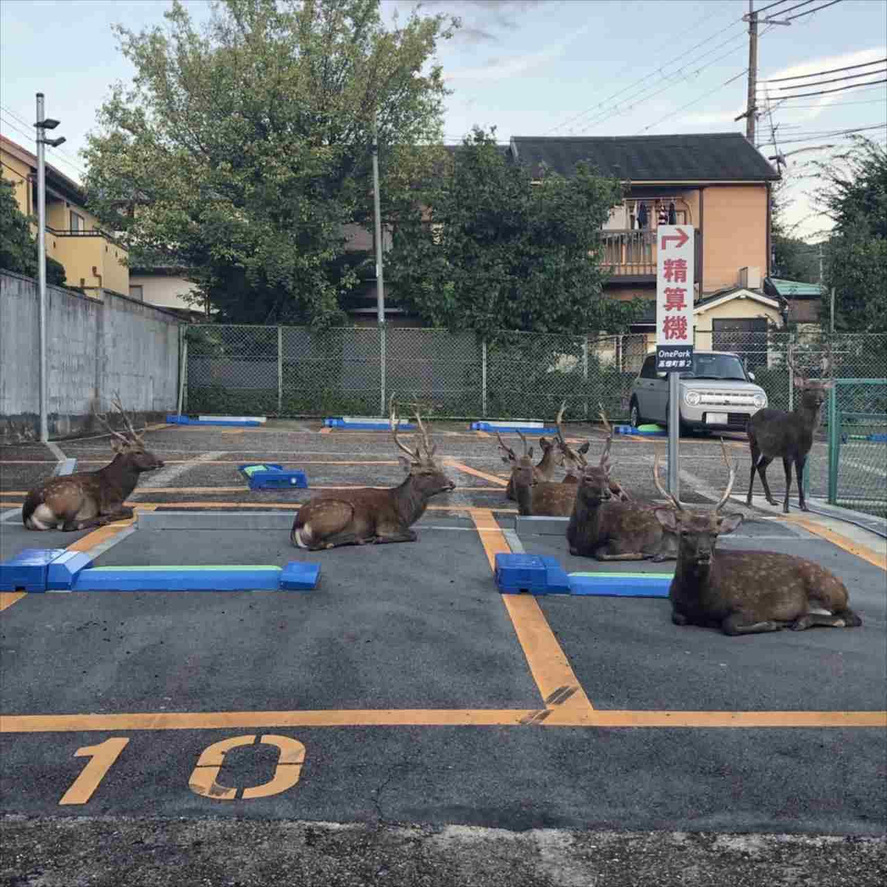 【さすが奈良】駐車場にとまるのは車だけじゃない?!なんと奈良を代表する『あの動物』のためのスペースになっていました!!