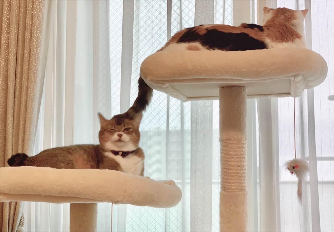 このしっぽの先にいたネコちゃんの表情にジワる!「ナイス表情」「案外気に入ってる?」