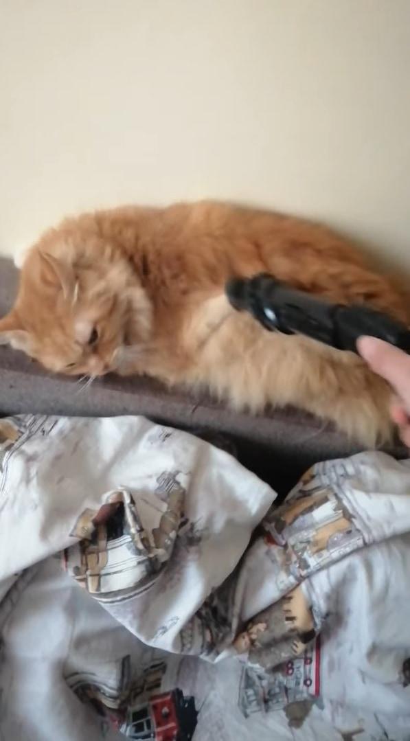 ブラッシング嫌いなネコ。しかし、○○で毛並みを整えるのは大好きなようです