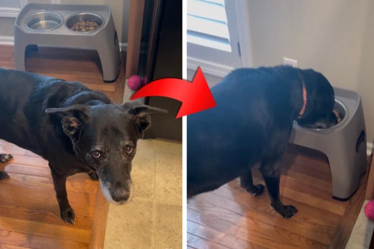 ドッグフードをそのままの状態では食べたくない愛犬。しかし、飼い主さんがあることをしてあげると・・・