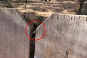 危機一髪すぎる!!愛犬たちを裏庭で遊ばせていた男性、柵の向こうを覗いたらなんと・・・