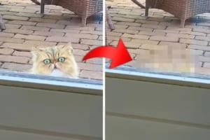 ネコに窓の外からじっと見つめられている!と思ったら・・・なんだかコミカルな動きをして去っていきました