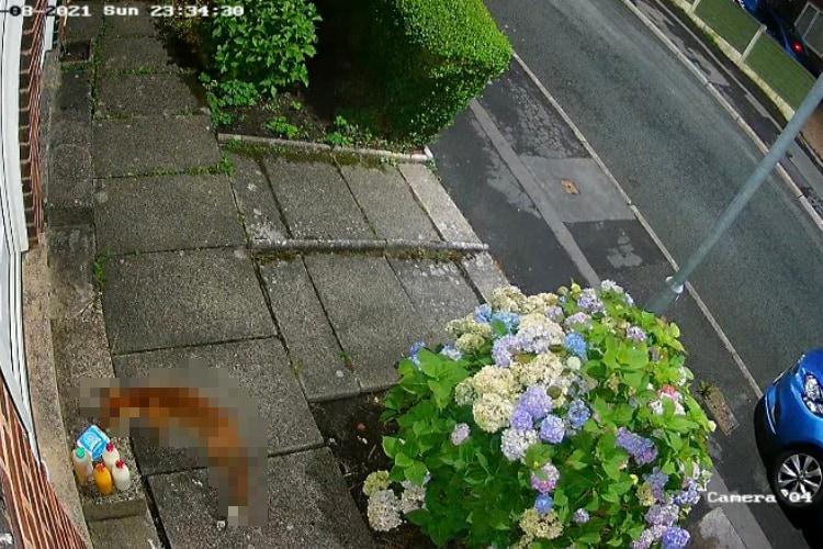 カメラは見た!玄関の前に配達された卵を盗んだのは・・・、なんと通りすがりの○○○でした!