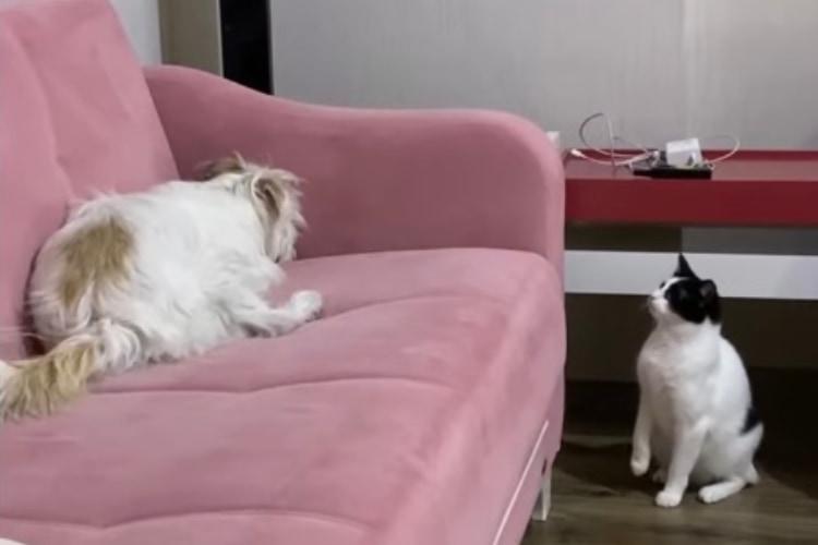 「イタズラっ子のシツケなら任せるニャ」ソファを掘るイヌに教えを叩きこむ厳しいネコ教官
