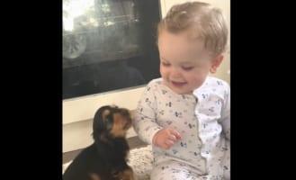 ずっと見ていられる・・・。赤ちゃんと子犬の初めましての様子がかわいすぎ!!