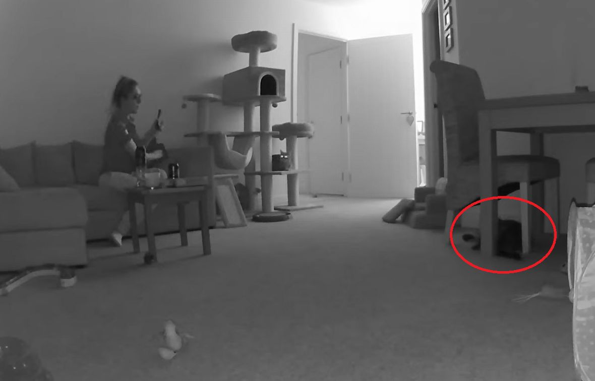 椅子の下にいた愛猫を撮影しようとしたら・・・飼い主さんのそんな思惑を飛び越える行動を見せました!