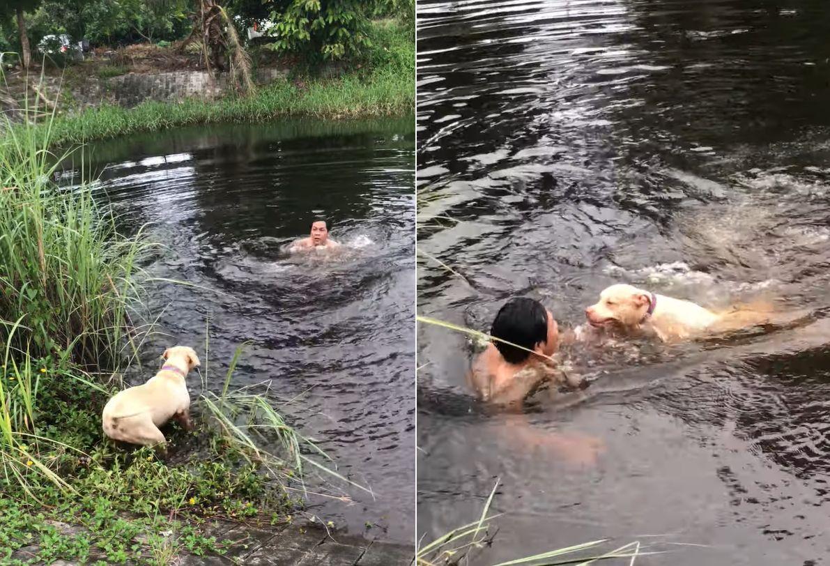 なんてお利口さんなの!男性が水中に飛び込んだのを溺れてしまったと思い込んだ子犬、なんと必死の救助活動へと向かいました!!