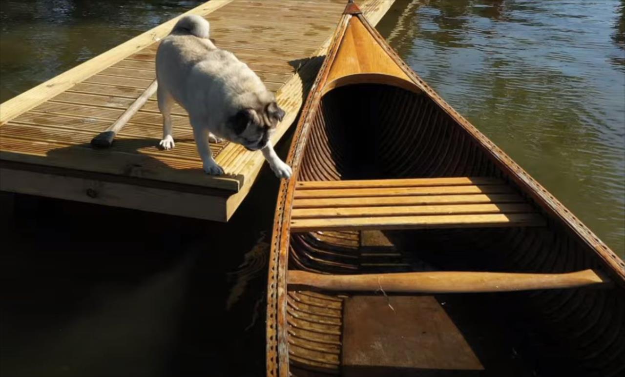 カヌーに乗ろうとしたパグ。しかし思いがけないアクシデントが発生してしまい・・・